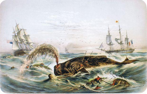 800px-Amerikanischer_un_französischer_Walfang_vor_Mexico_(1848)